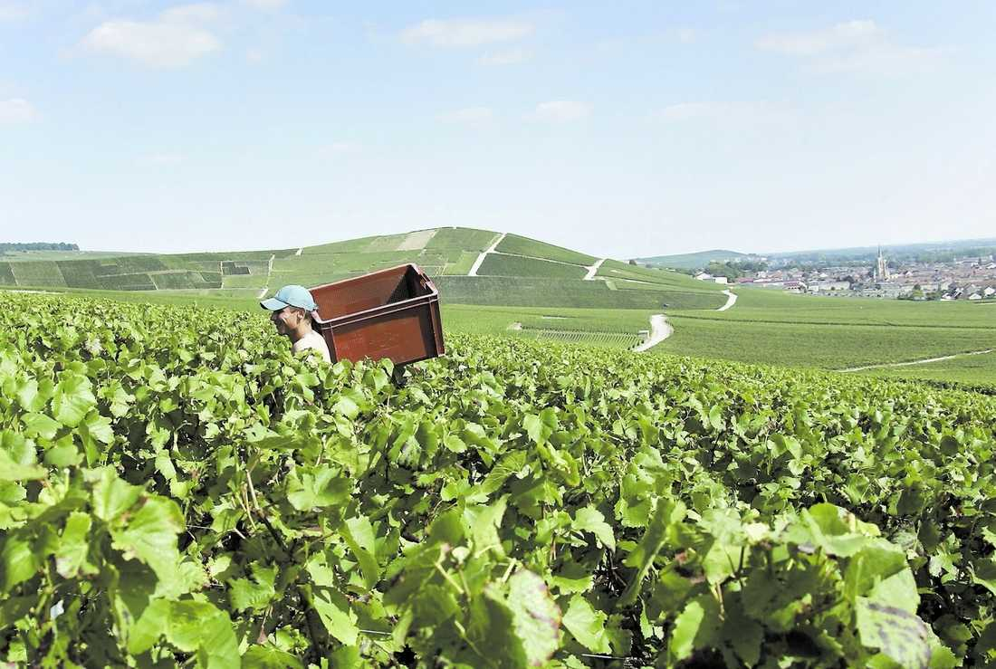 Karta Champagnedistriktet Frankrike.Guide Till Champagne En Riktig Bubblare Aftonbladet