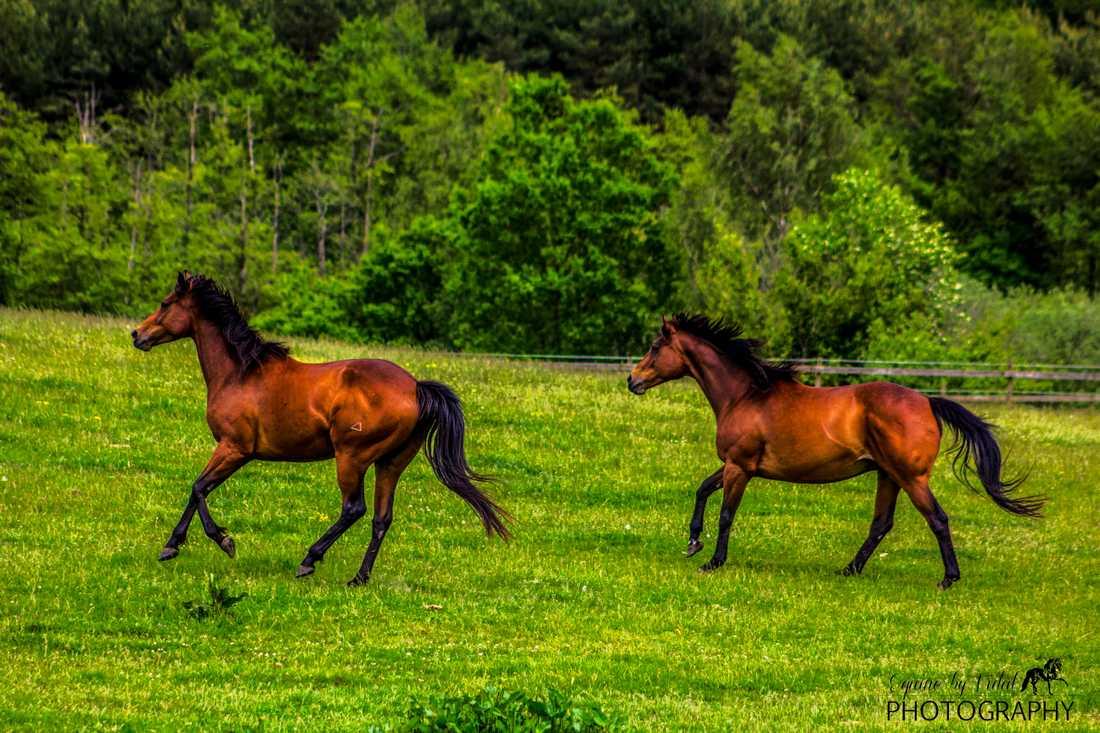 Alla hästraser är välkomna.