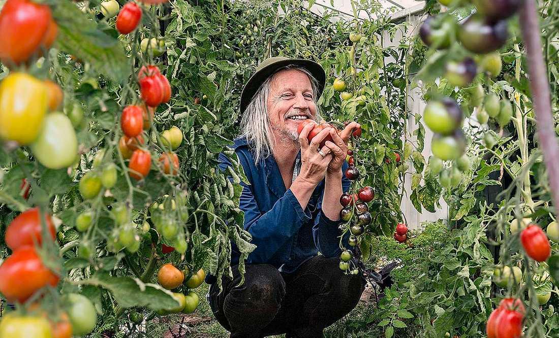 """Musikern och författaren Stefan Sundström har skrivit flera böcker om hobbyodling. Han vurmar framför allt för tomater. """"Det blev så uppenbart att det var mycket bättre att odla dom istället för att köpa, man förstår plötslig vad en tomat är, en smakbomb sänd av solen"""", skriver han."""