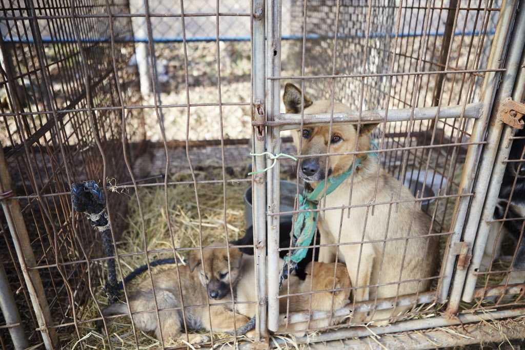 Hundarna på bilden kommer från tidigare räddningsinsats i Sydkorea.