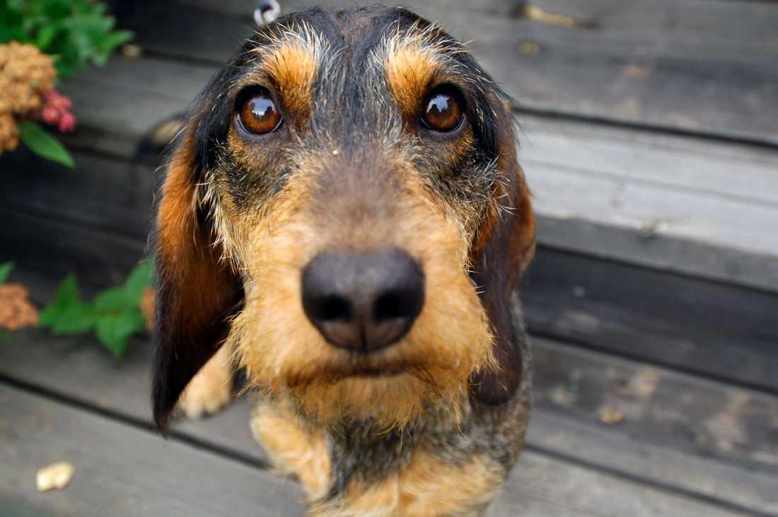 Arkivbild. De flesta fallen av djurförbud handlar om sällskapsdjur. En tredjedel av djurförbuden i landet utfärdas i Skåne län.