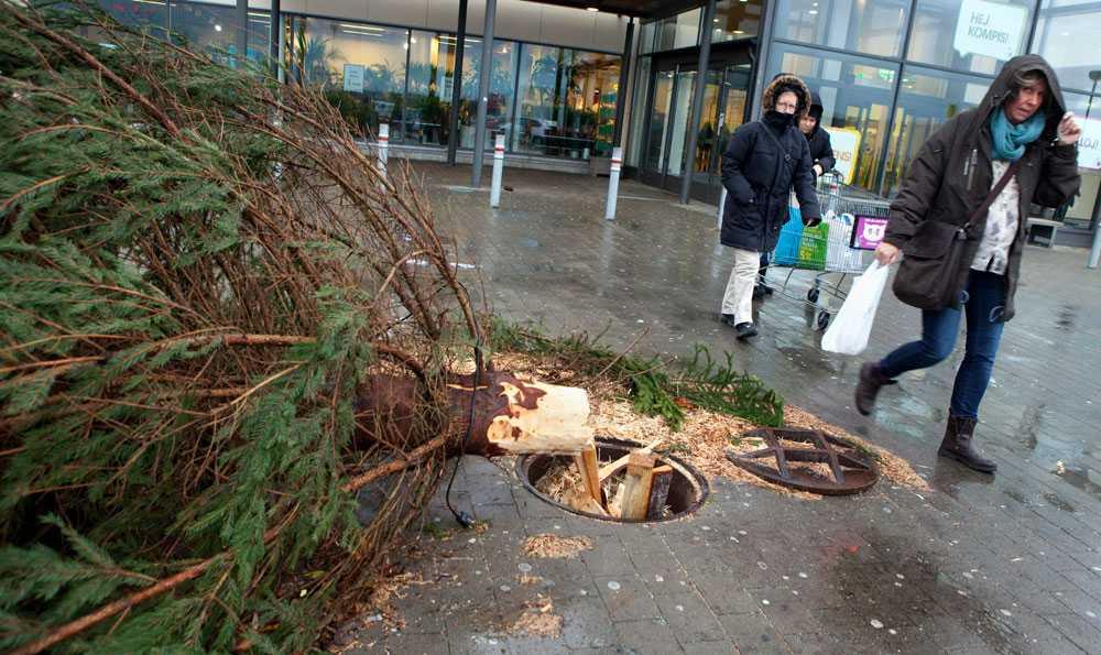 Vält gran 2 Stormfälld julgran utanför Burlövs Center norr om Malmö på söndagen.