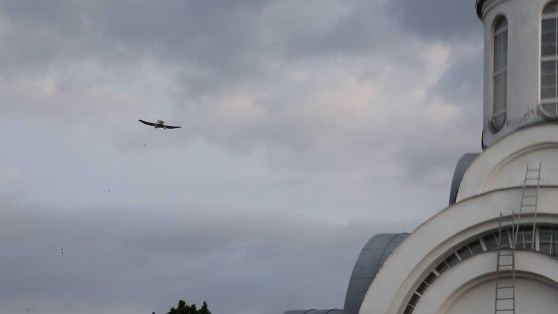 Här syns flygplanet när det släpper nallebjörnarna över Vitryssland, uppger Studio total.