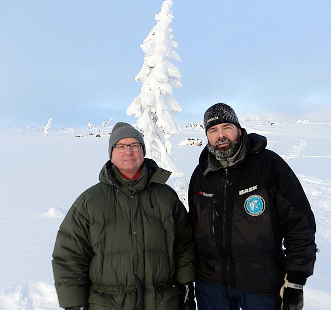 DÖPTE TRÄDET EFTER SIN HUND Pierre Hedlund, till höger i bild, guidar oss till granen. När han fann trädet döpte han det till Old Tjikko efter sin hund, en Siberian Husky.