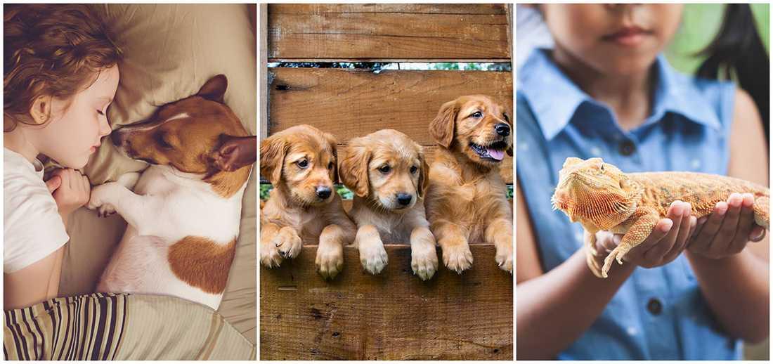 Det finns många saker att tänka på innan man köper ett husdjur till barnen.