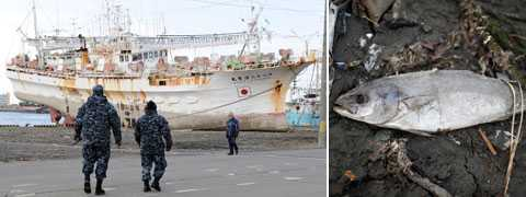 Efter att radioaktiviteten ökat med 80 gånger i japanska hav så blir det nu hårdare kontroll av skaldjur och fisk i Japan.