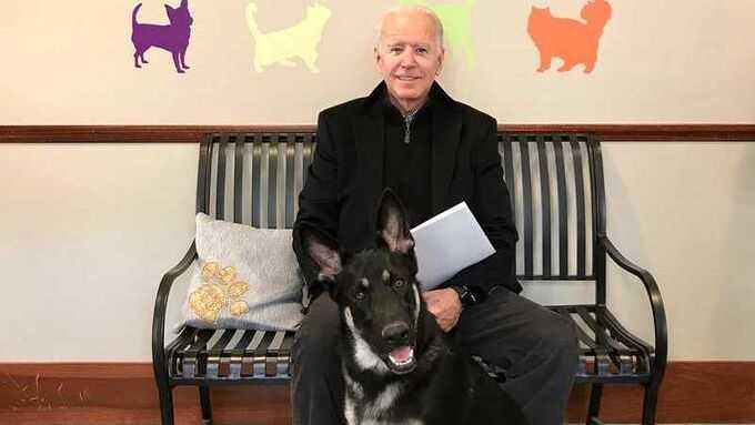 Joe Biden skadad efter hundlek