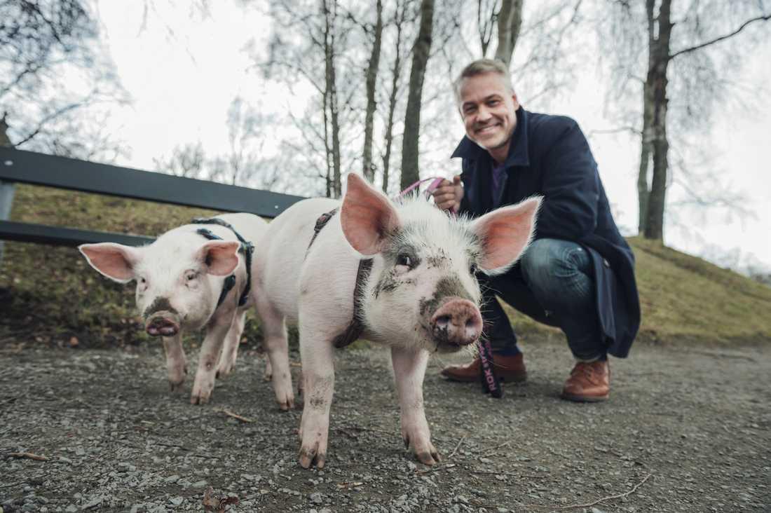 "Madde, Victoria & Henrik. Schyffert umgås med grisar i SVT:s ""Köttets lustar""."