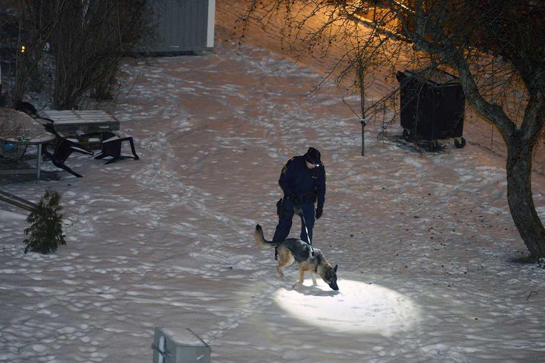 En hundförare i närheten av mordplatsen.