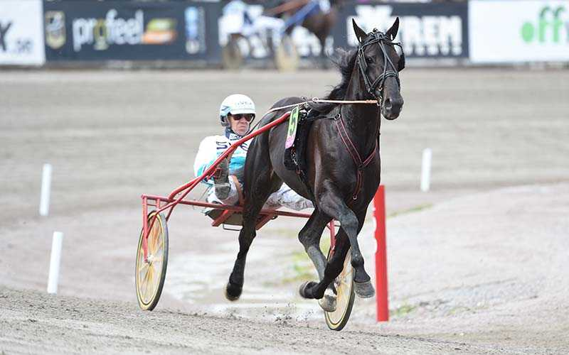 Elitloppsvinnaren Magic Tonight är redo för sitt äventyr i USA