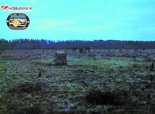 Stora Mosse nationalpark.