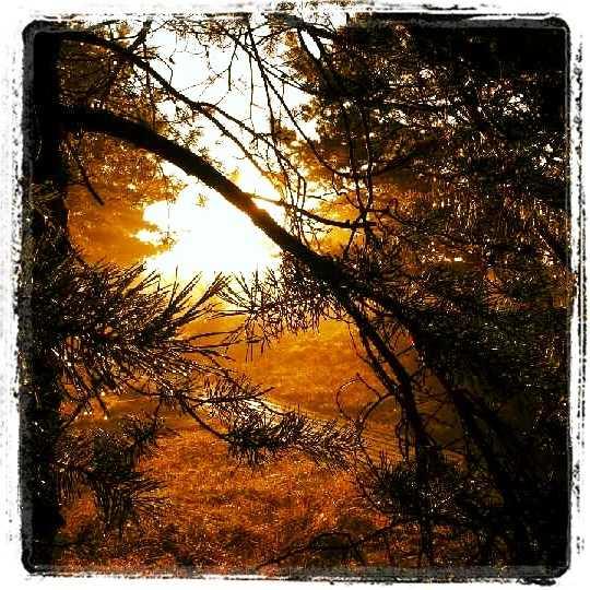 Tidig morgon på Böda Sand