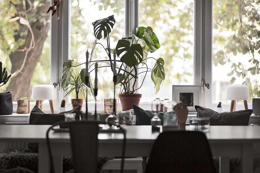 Gröna växter gör mycket för intrycket