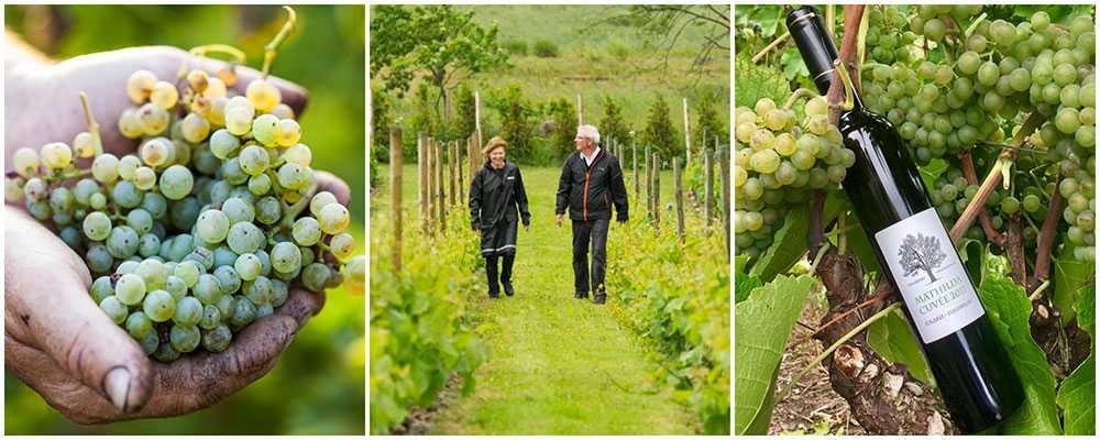Carl-Magnus och Marie-Louise Hedin har odlat vin på Villa Mathilda sedan 2006.