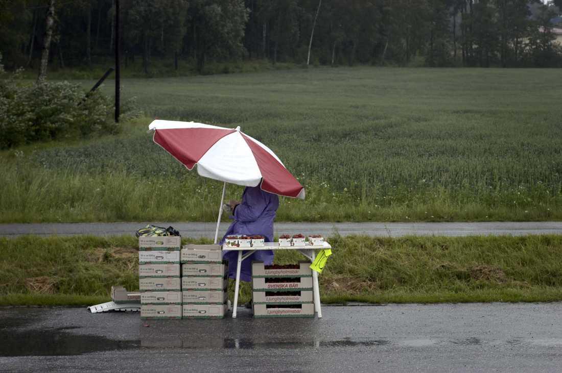 En jordgubbsförsäljare som när som helst kan få påhälsning av Jordbruksverkets kontrollanter. Arkivbild.