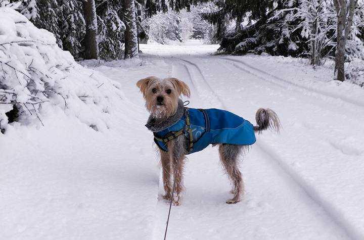 Finley är rädd för smällare och har mått dåligt hela veckan innan nyår.