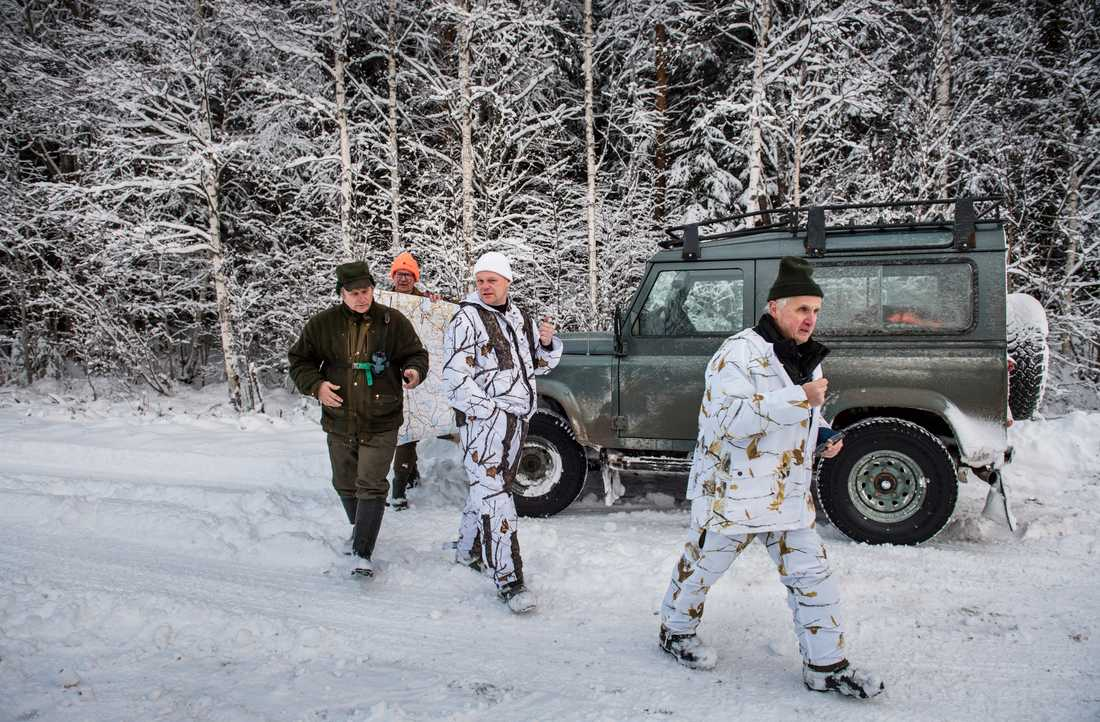 Det är svårt att jaga vargen, som rör sig över stora områden. Spårningen sker främst med bil.