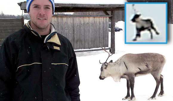 """""""Min kollega ropade till mig att det var en ren i backen. Då tänkte jag: Är han full eller?"""", säger Daniel Urander som filmade renens tjurrusning efter slalomåkaren."""