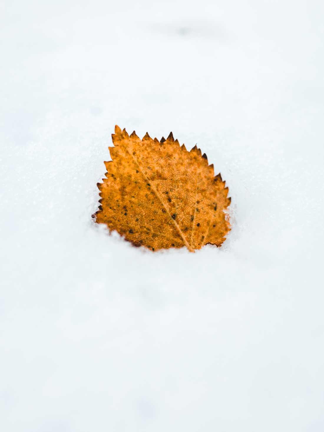 Jonas arbetar med foto och har här avbildat hur hösten möter vintern i fjällen.