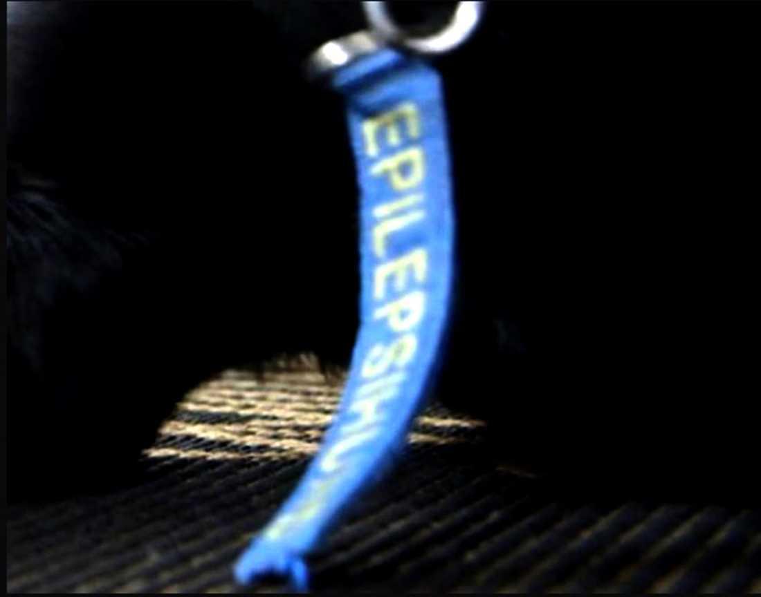 På Dexters halsband hänger en remsa med texten EPILEPSIHUND.