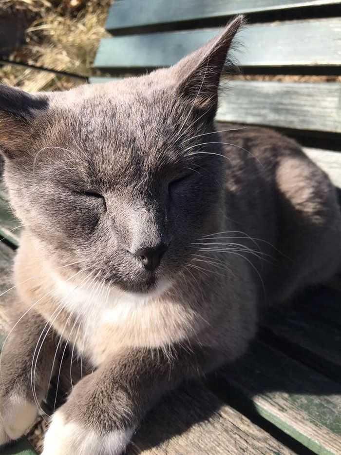 Katten Cato njuter av solen.