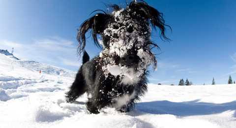 Fel Frusen vovve i snön.
