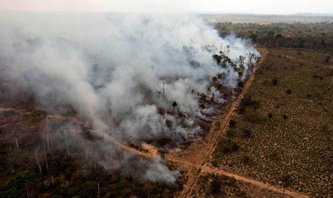 Ett avverkat regnskogsområde i Novo Progresso i Brasilien som brinner