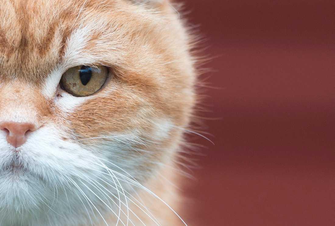 Polisen tvingades avliva en katt efter att den blivit beskjuten. Arkivbild.