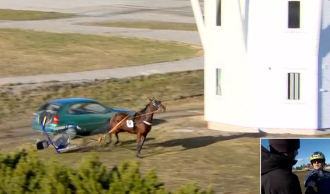 Hästen Nogara kom lös – sulkyn krossade bakrutan på en parkerad bil