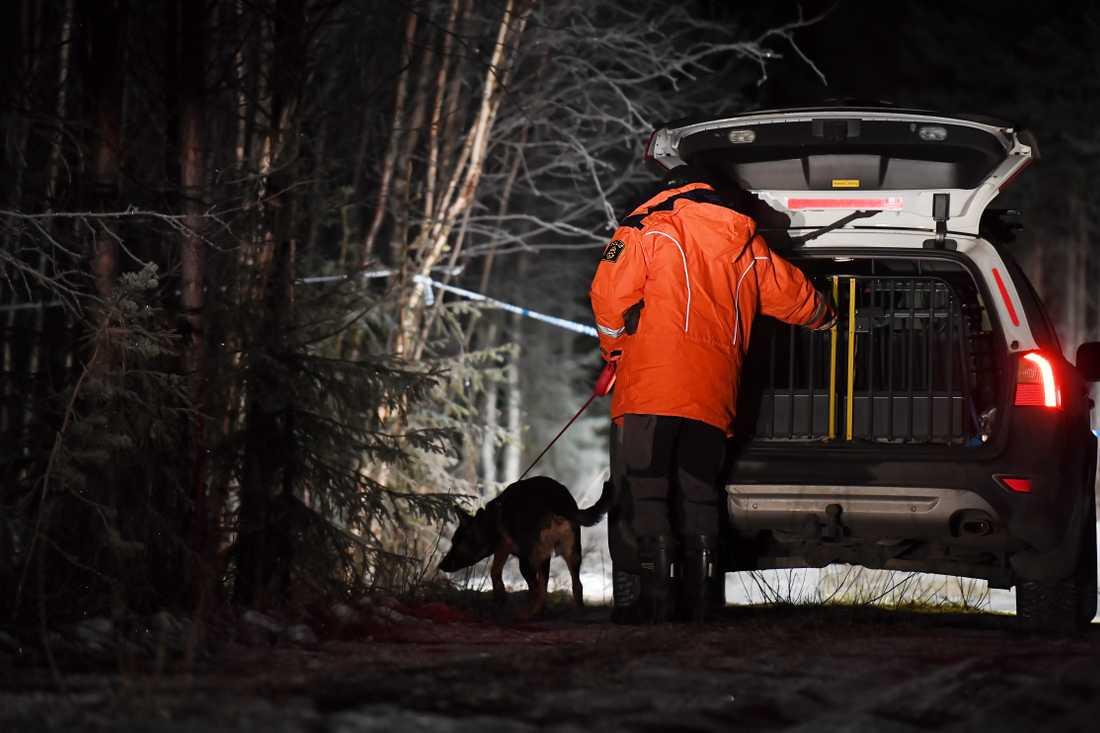 Hundpatruller sökte igenom skogsområdet i Töre utanför Kalix.