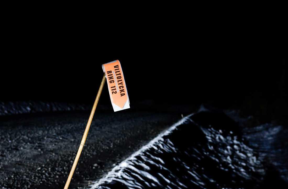 Mellan januari och maj i år rapporterades drygt 20000 viltolyckor. Arkivbild.