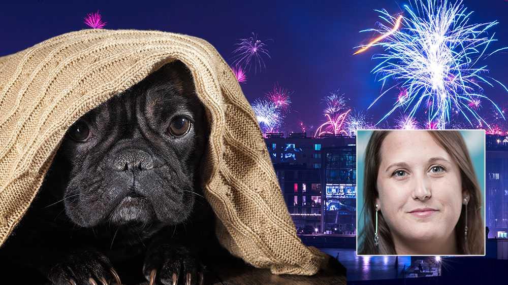 Att fira in det nya året tillsammans med vänner och familj borde vara festligt – mindre festligt blir det för de djur som skräms till följd av fyrverkerier och raketer, skriver Camilla Bergvall, förbundsordförande Djurens Rätt.