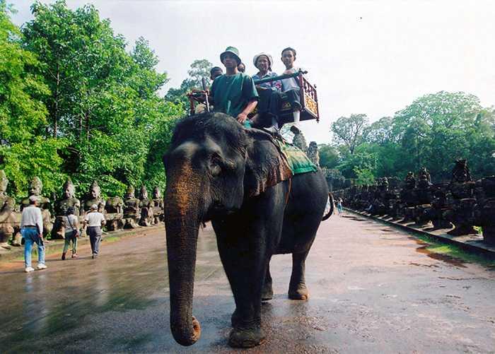 Den populära turistattraktionen elefantridning har en mörk baksida