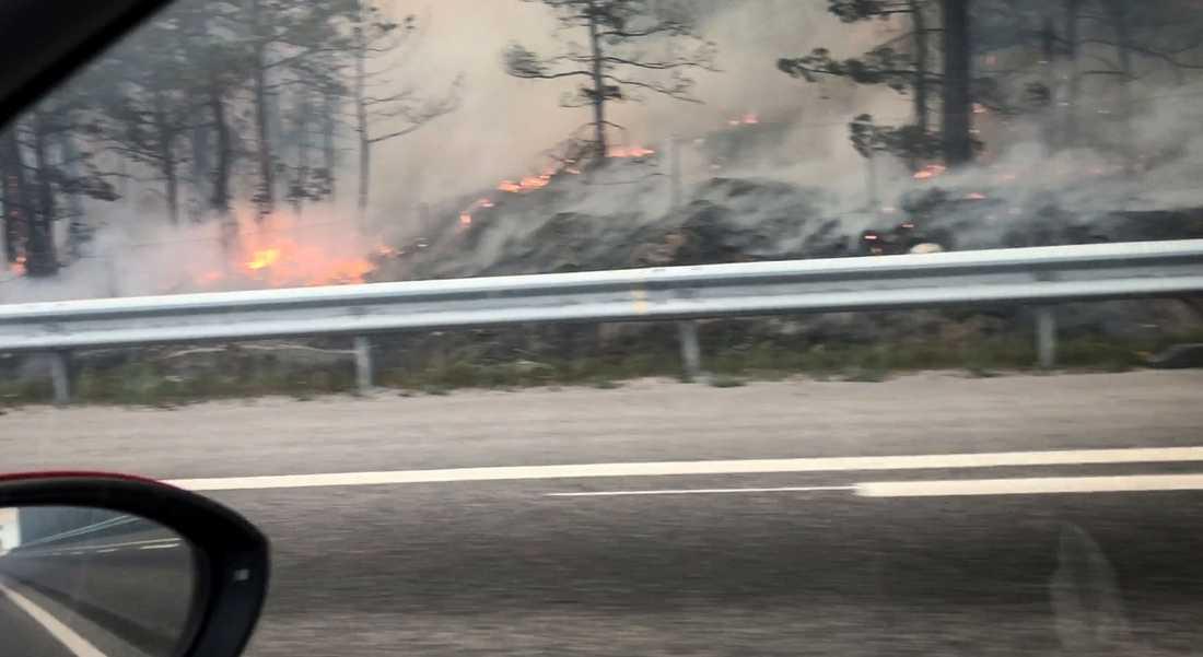 Kraftig brand i ett skogsparti i Nacka utanför Stockholm i juni.
