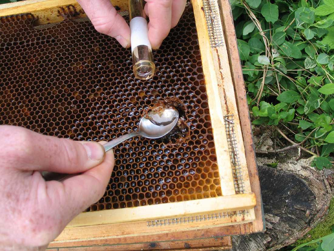 Färsk honung direkt från vaxkakan.