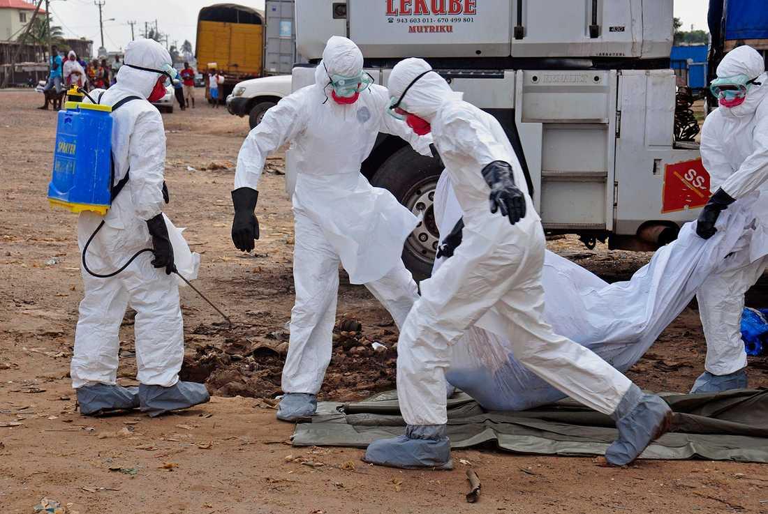 Sjukvårdare bär en person som dött av ebola i Liberias huvudstad Monrovia.