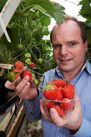 Lars Jacobsen har sålt sina första jordgubbar i år.