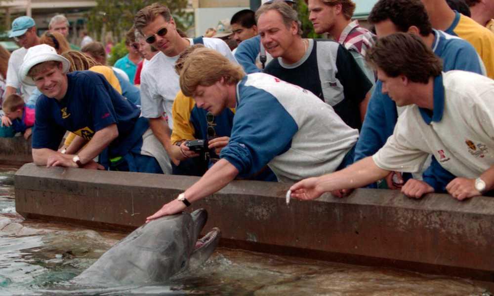 Hårdingen Schwarz tog det försiktigt med delfinerna.
