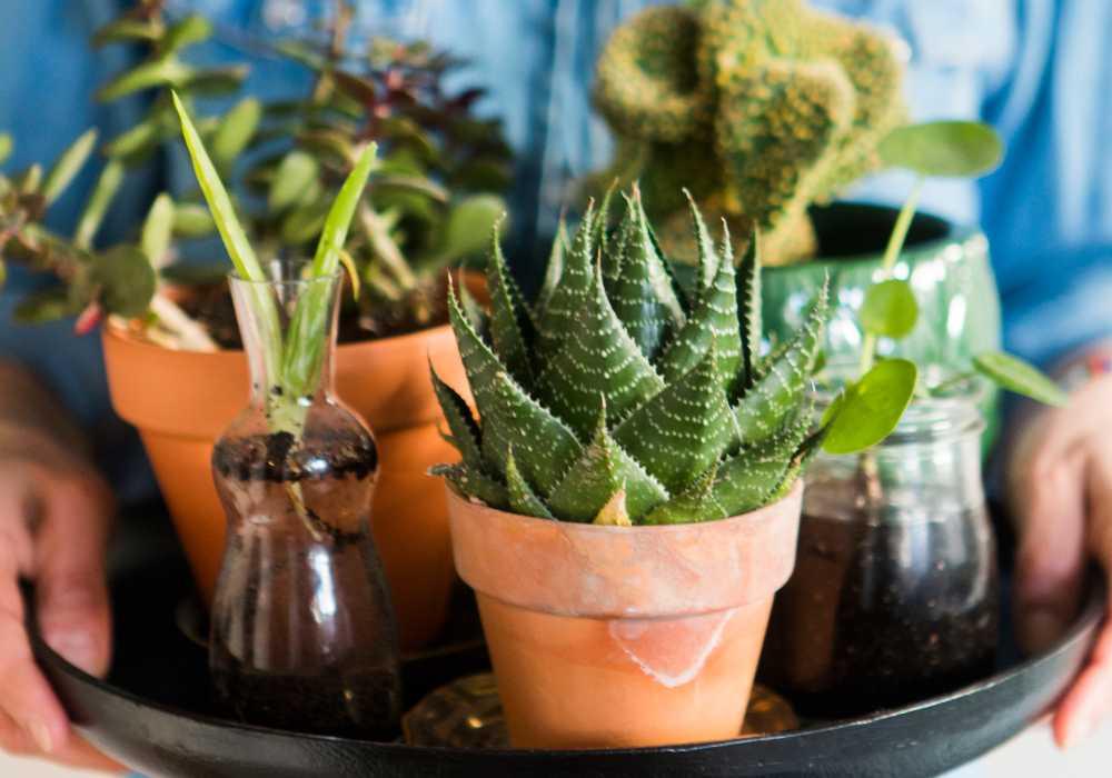Dekorera med växter.