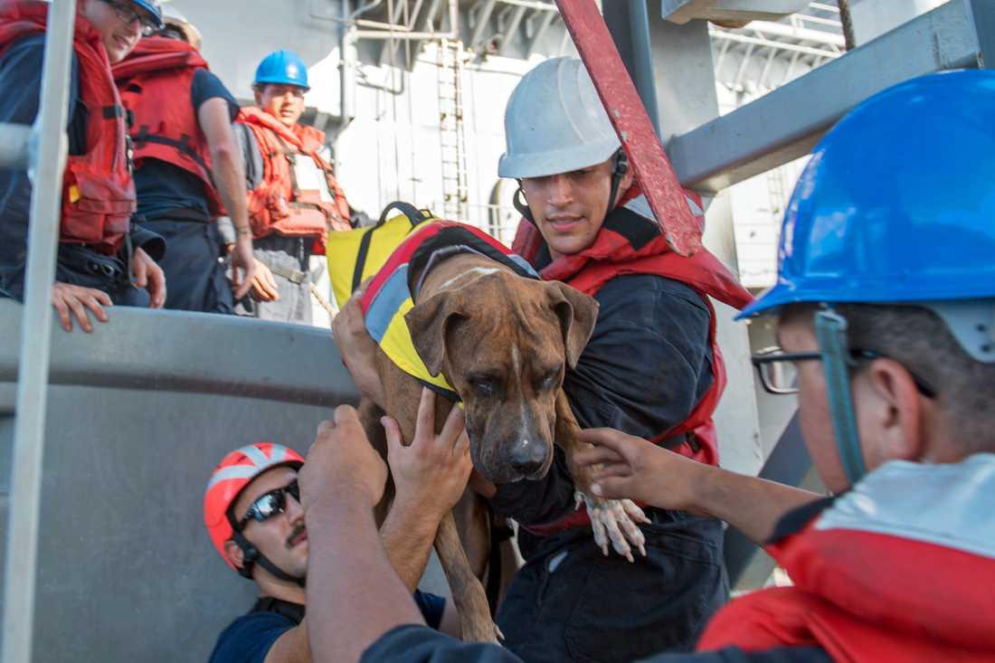 Hunden Zeus som var med på resan tas om hand.