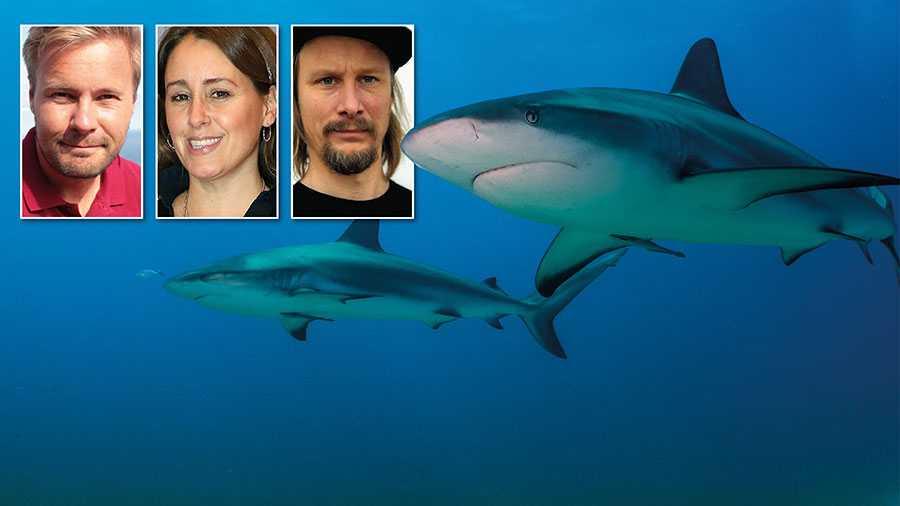 Så länge det är lagligt att sälja och servera hajfenssoppa i Sverige bidrar vi till  massutrotning av hajar och till att gynna organiserad kriminalitet, skriver David C. Bernvi, Doreen Månsson och Henrik Hallgren.