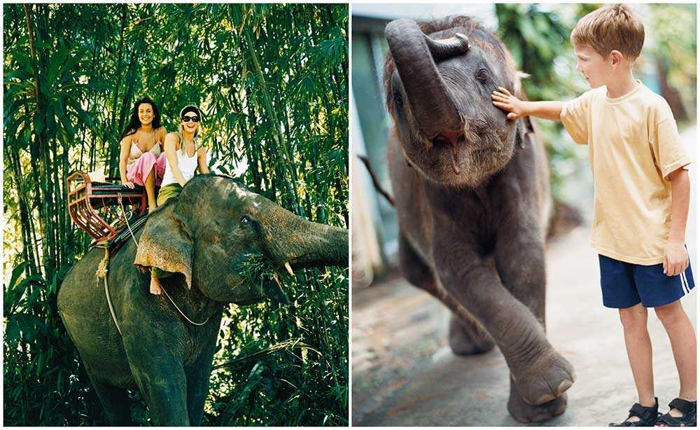 Nu blir det förbjudet att rida på elefanter i Chiang Mai i Thailand.