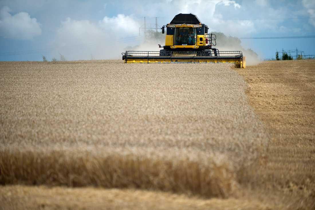 Brister i Jordbruksverkets it-system kan innebära dyra EU-böter för Sverige. Arkivbild.