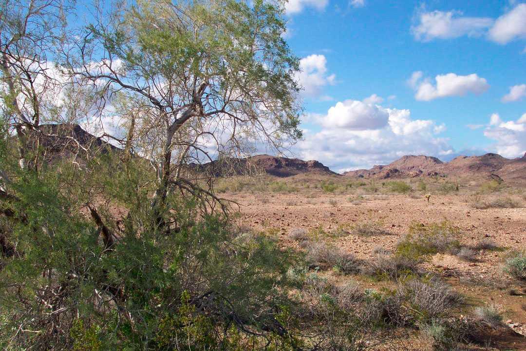 """VÄRLDENS SOLIGASTE PLATS I Yuma i amerikanska delstaten Arizona skiner solen i snitt elva timmar per dygn och 90 procent av året lyder väderprognosen för området: """"Sol!"""""""