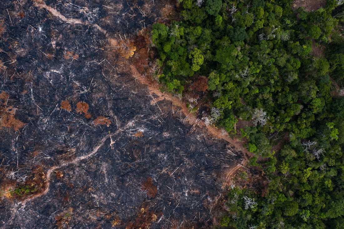 Bränd skog i brasilianska Amazonas. Arkivbild.