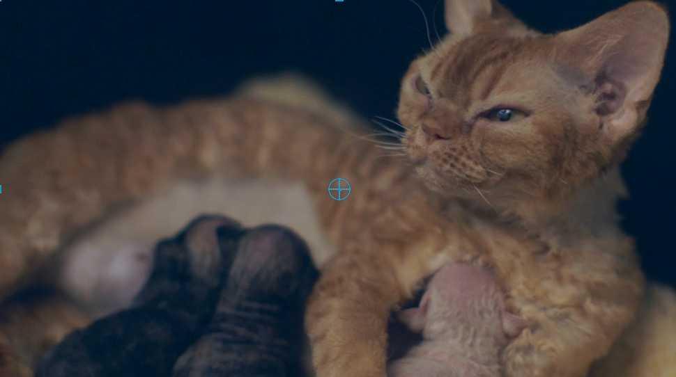 Studie visar: Kattklipp bra för arbetsmiljön