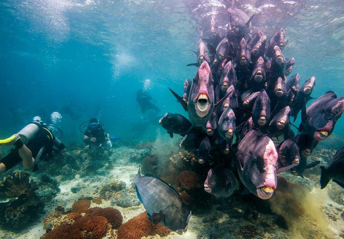 Med ett dykcertifikat kan du dyka överallt i världen.