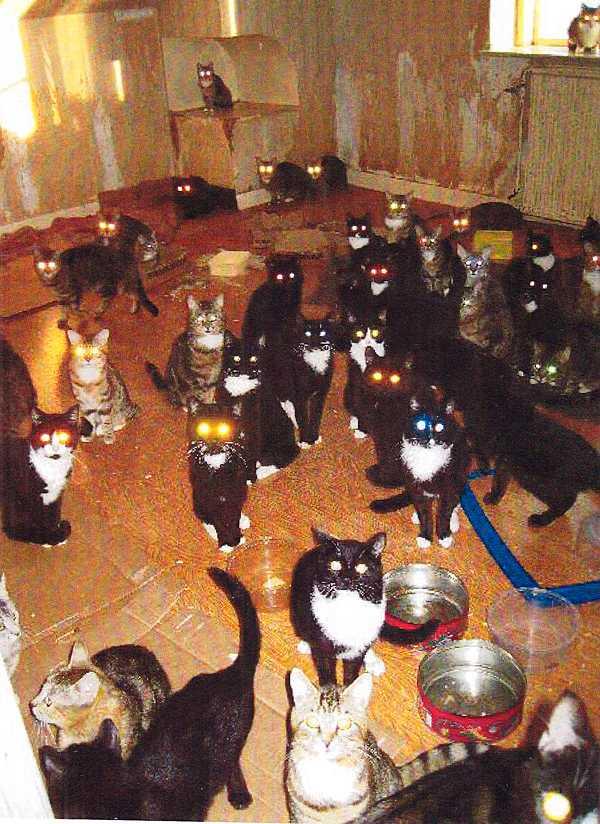 190 katter hittades på gården.