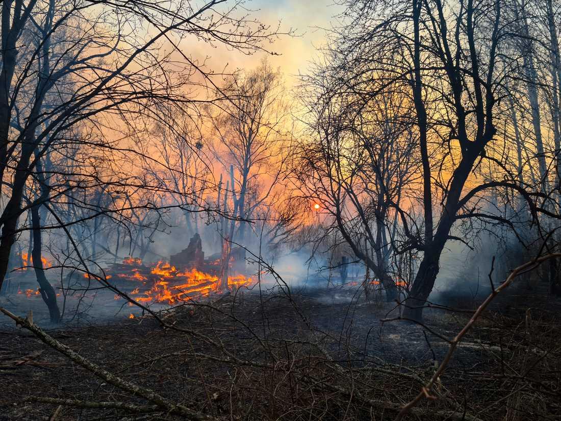 Skogsbranden i den avspärrade zonen nära kärnkraftverket i Tjernobyl.