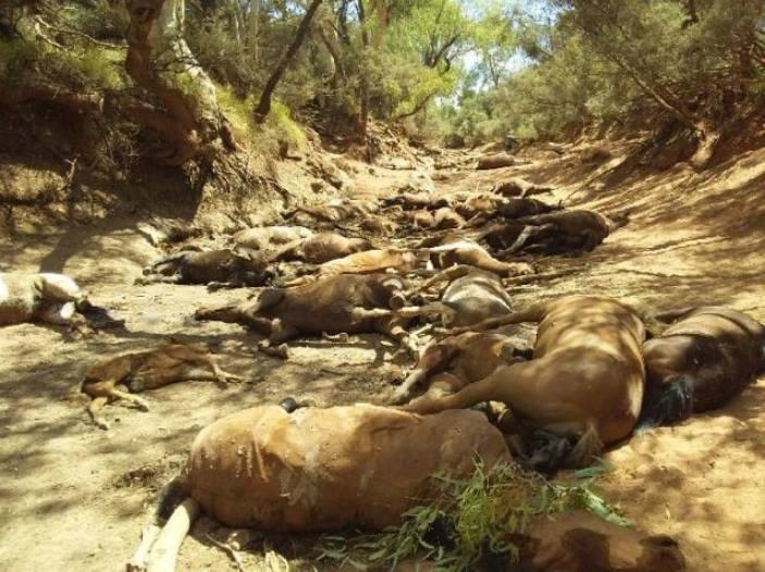 40 hästar tros ha dött av uttorkning.